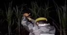 অভিযানে পিস্তল জ্যাম, দারোগা মুখে বললেন 'ঠা ঠা'! (ভিডিও)