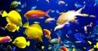 কাঁচের বাক্স বা অ্যাকুরিয়ামে মাছ পালনের ইতিহাস